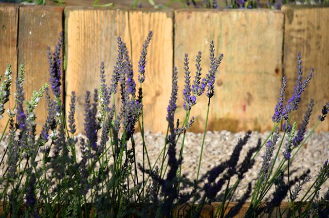 RHS Hampton 2016 Summer The Lavender Garden Lisa Cox