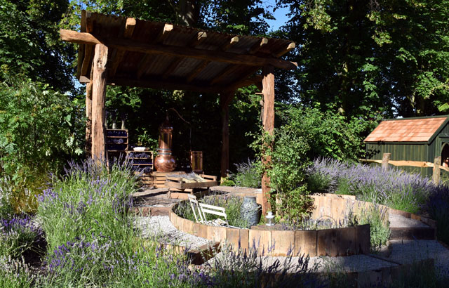 RHS Hampton 2016 The Lavender Garden Lisa Cox