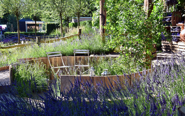 The Lavender Garden RHS Hampton 2016 Lisa Cox