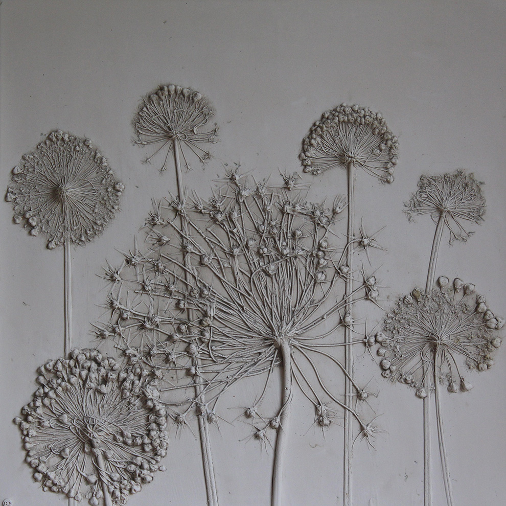 Alliums Rachel Dein