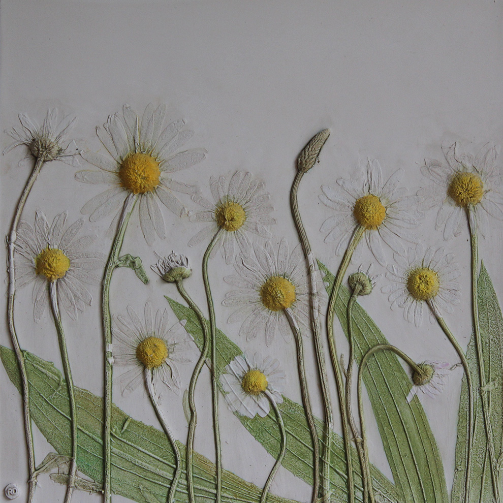 Daisies from Hampstead Heath Rachel Dein