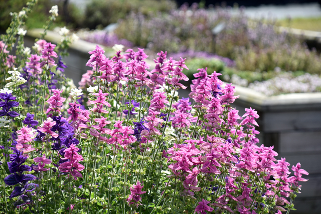 Jekka Herb Farm Lisa Cox Garden Designs