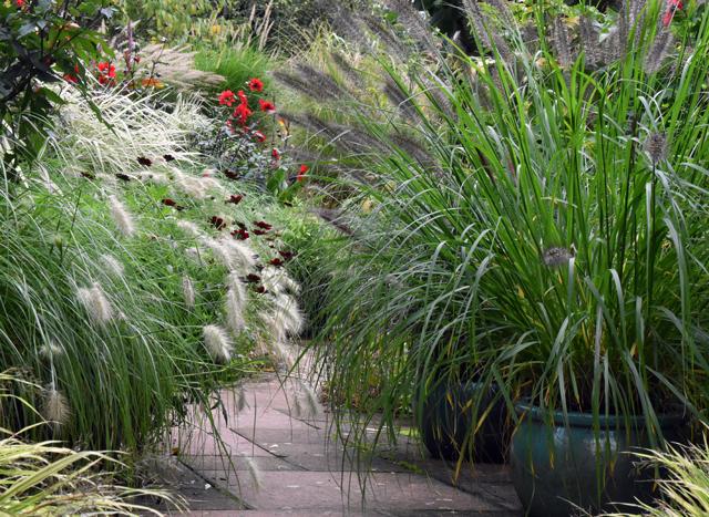 courtyard-planting-at-barn-house-garden-lisa-cox